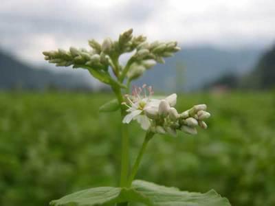 7月1日のそばの花のアップ2
